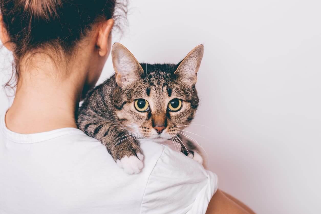 夢占い|猫の夢の意味は?猫があなたを見つめていたら?子猫の夢は?解説!